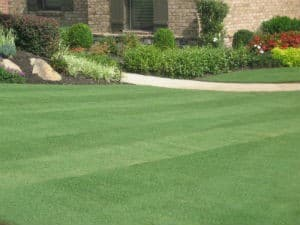 Lawn Care Gainesville GA