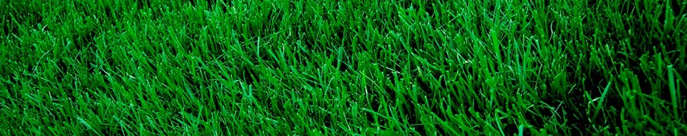 atlanta lawn care, lawn care in atlanta ga, all turf lawn care