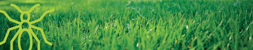 all turf lawn care, atlanta lawn care services, lawn care in atlanta ga