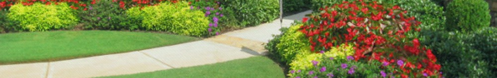 all turf lawn care, basic lawn care program, lawn care in atlanta ga