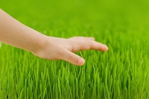 Lawn Fertilizer Companies Atlanta GA, lawn care atlanta, all turf lawn care