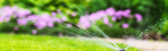Watering Your Lawn During Summer