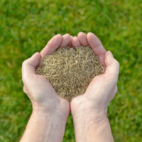 how to overseed your georgia fescue lawn, all turf lawn care, overseed lawn atlanta