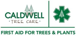 caldwell tree care, professional tree care, atlanta tree care