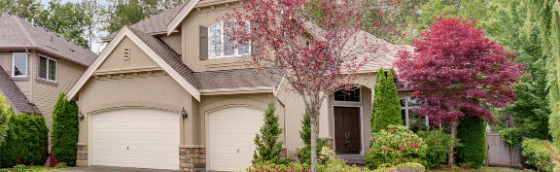 5 of the best trees for front yard landscaping, all turf lawn care