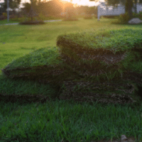 sod lawn care, all turf lawn care, how to care for your new lawn in atlanta