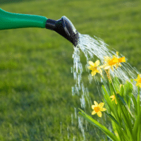 spring lawn care tips, best spring lawn treatment tips, all turf lawn care