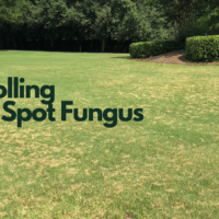 Lawn Disease, Dollar Spot Fungus, All Turf Lawn Care, Atlanta GA