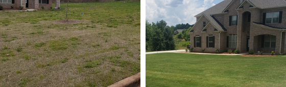 how to fix a lawn full of weeds, lawn weed control, all turf lawn care, atlanta ga