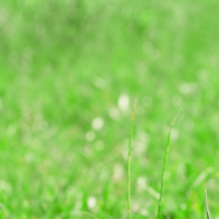 Lawn Pests, Lawn Care Service, All Turf Lawn Care, Atlanta GA