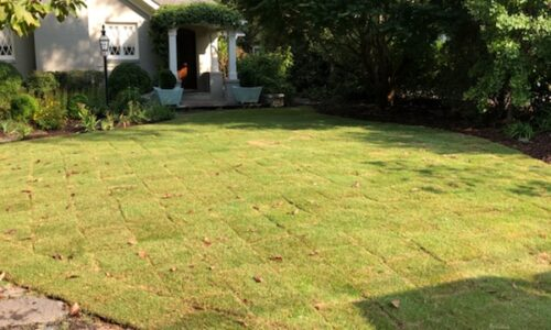 lawn care results, before and after, all turf lawn care, atlanta ga