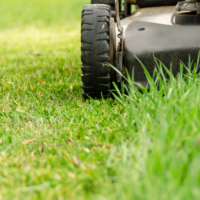 Spring Lawn Care Tips, When to Scalp Lawn, All Turf Lawn Care, Atlanta GA